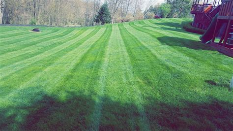 grass cutting lawn maintenance treesdale landscape company