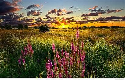 Sunset Summer Nature Field Wallpapers Wide Desktop