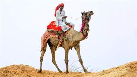 camel  mers   signs  illness cidrap