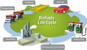 Flow Diagram Of Biofuel Life Cycle