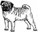Pug Clip Coloring Clipart Puppy Outline Dog Cliparts Printable Sheets Library Dogs Boxer Poop Popular sketch template