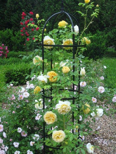 So Finden Sie Die Passende Rosensorte by 74 Besten Die Sch 246 Nste Unter Allen Blumen Bilder