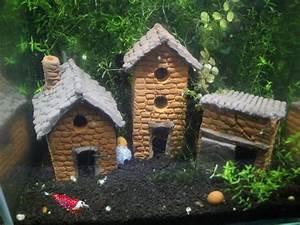 Tiere Für Aquarium : aquarium siedlung garnelen fische krebse ~ Lizthompson.info Haus und Dekorationen