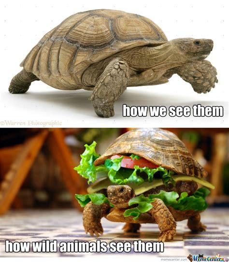 Tortoise Meme - tortoise by klevous meme center