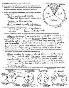 5 1 Study Guide The Cell Cycle