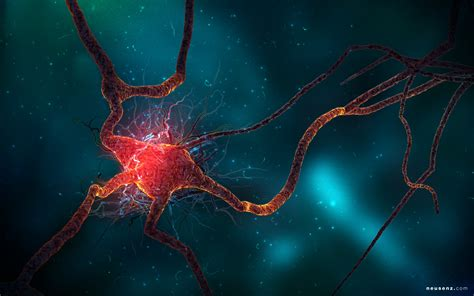 Neuron Cell Wallpapers