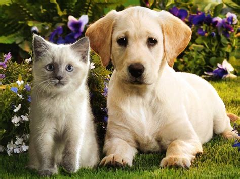cat puppy pictures kittens and puppies
