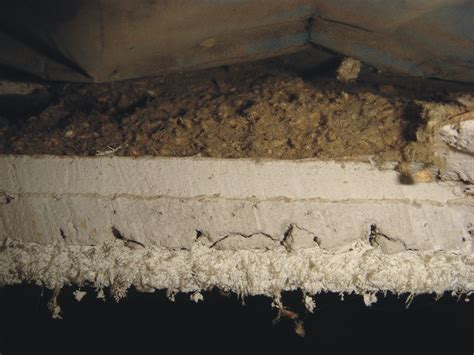 cross section asbestos sprayed  acoustical ceiling syste