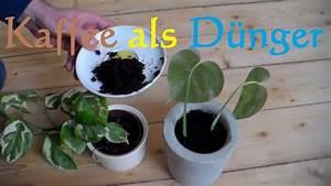 Kaffeesatz Als Dünger : kaffeesatz d nger f r zimmerpflanzen umweltfreundlicher ~ Watch28wear.com Haus und Dekorationen