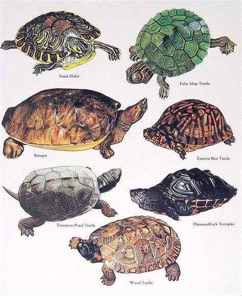 what color is a turtle 25 best ideas about pet turtle on baby