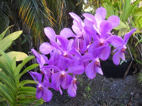 orchid plant orchid care caring for orchids the right way