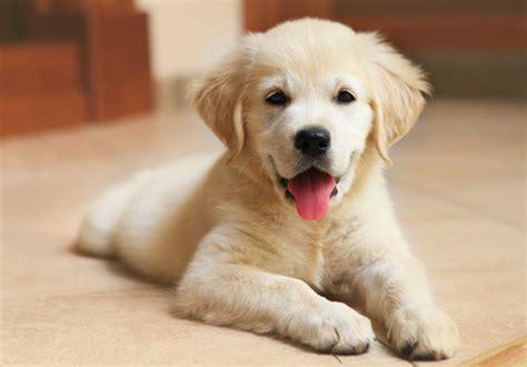 advocates    animal protection legislation