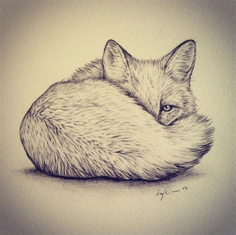 pictures    animal pencil drawings ideas