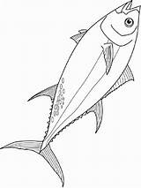 Tuna Coloring Fish Printable Recommended Colors sketch template
