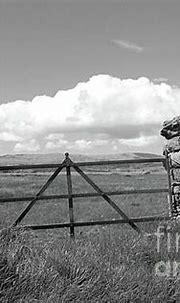 Rusty Gate Farm bw Donegal by Eddie Barron   Donegal, St ...