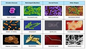 Bacteria « KaiserScience