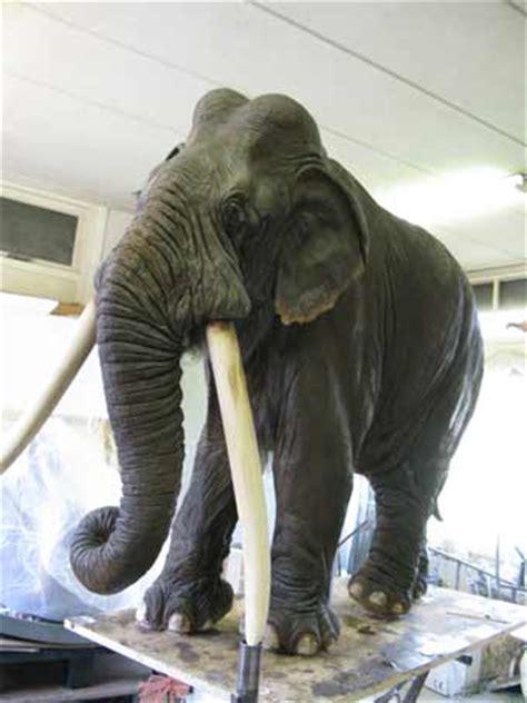 bouw bosolifant