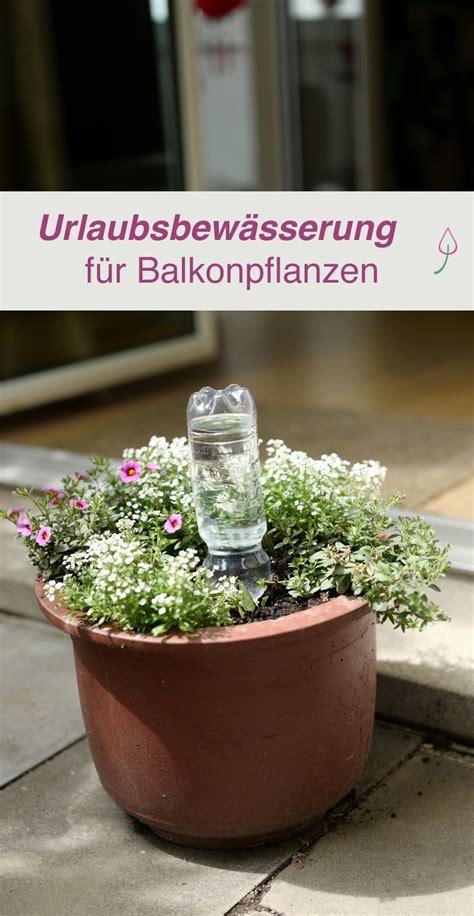 Bewässern Im Urlaub by Diy Urlaubsbew 228 Sserung F 252 R Balkonpflanzen Selber Machen