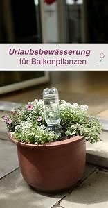 Blumen Bewässerung Im Urlaub : diy urlaubsbew sserung f r balkonpflanzen selber machen terrasse und balkon pinterest ~ Orissabook.com Haus und Dekorationen