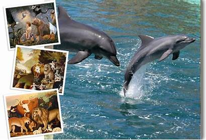Dolphins Ira Fischer Jumping Water Protect Bottlenose