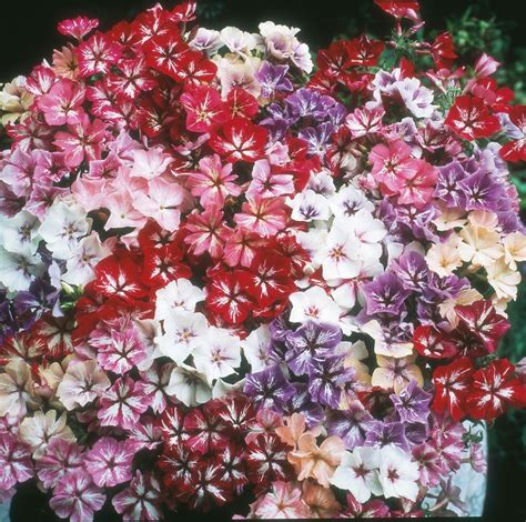 garden flowers seeds bulbs canada discount page 7