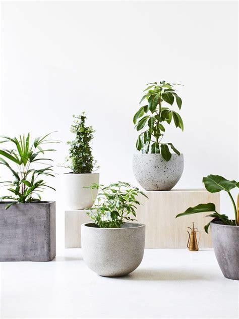 designer plants 25 best plant design ideas on pinterest landscape design plants and vines