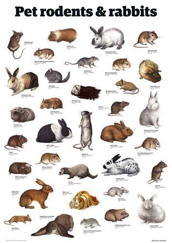 Pet rodents & rabbits by Guardian Wallchart Animais
