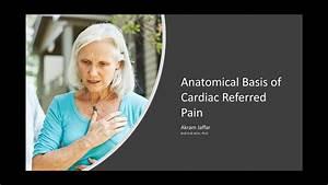 Anatomical Basis Of Cardiac Referred Pain
