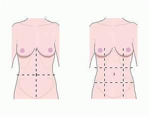 Four Quadrants And Nine Regions Of The Abdomen