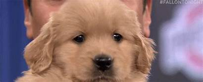 Puppy Wink Dog Gifs National Camera Tenor