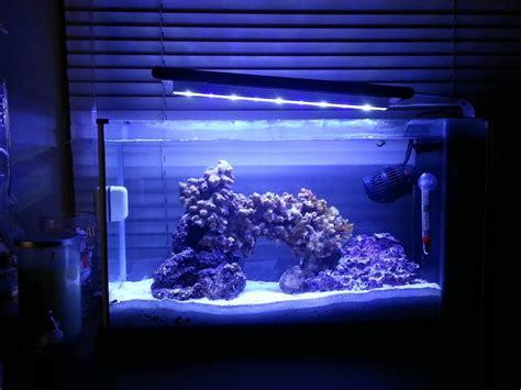 Fluval Spec Aquascape by Fluval Spec V My Nano Pico Pico Reefs Nano