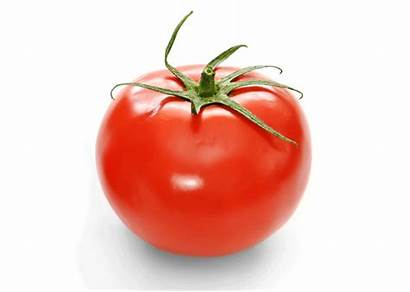 Tomatoes Animated Clipart Tomato Fast Foods Library