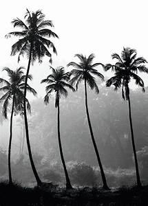 Palme Schwarz Weiß : palm trees poster in der gruppe poster schwarz wei bei desenio ab 8379 tropical poster ~ Eleganceandgraceweddings.com Haus und Dekorationen
