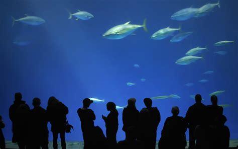 the monterey bay aquarium monterey bay aquarium exploration family