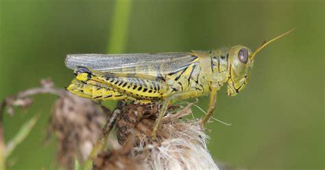 concerned  grasshoppers  planting