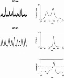 Oscillatory Patterns In Sympathetic Neural Discharge And Cardiovascular Variables During