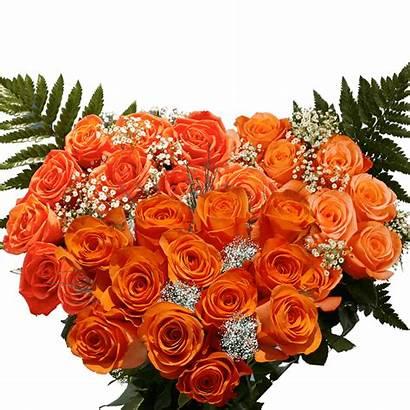 Roses Dozen Orange Globalrose Rose Fillers