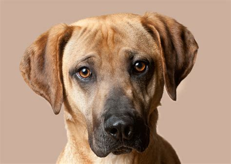 Black Cur Shed A Lot the 20 breeds
