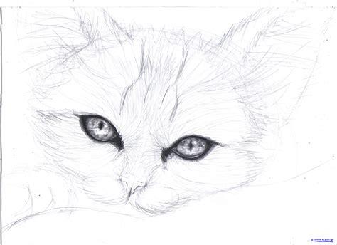 Draw A Realistic Kitten, Cute Kitten, Step By Step