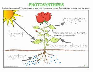 17 best images about photosynthesis pinterest equation anchor charts and plants
