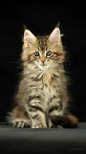 telecharger mico chat pour pc gratuit