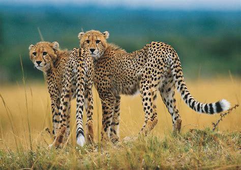 Endangered Animals Vs Human Needs  The Summary Week