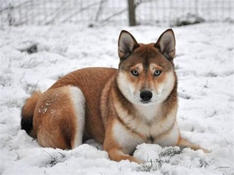 Can You Tell Which Dog Breeds Make Up These Mutts?