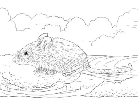 common house mouse coloring page  printable coloring