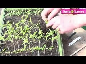 Quand Semer Les Tomates : repiquer des plants de tomates youtube ~ Melissatoandfro.com Idées de Décoration