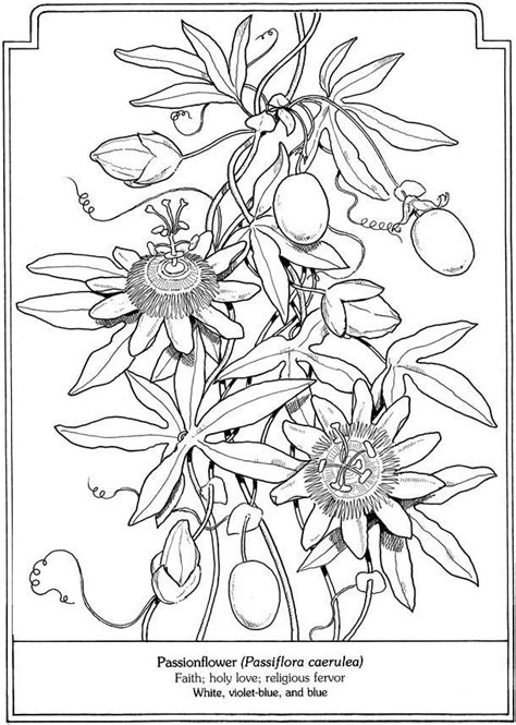 coloring page passionflower dover publications