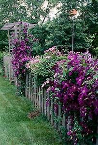 Picket fences, Clematis and Fence on Pinterest