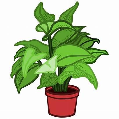 Plant Clipart Potted Coloured Svg Clip Transparent