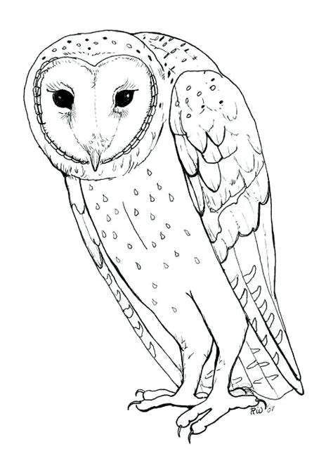 HD wallpapers coloring page of a barn owl