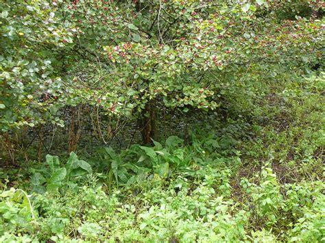 garden bushes forest gardening in a nutshell veganic agriculture network